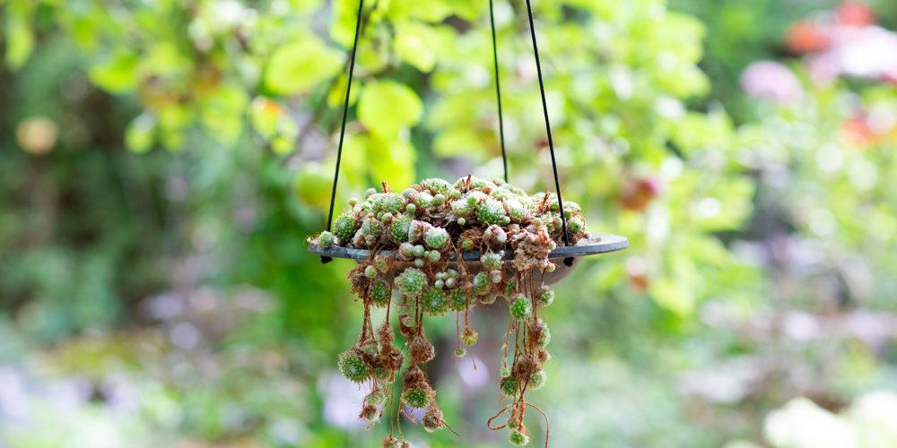 Fågelbad hängande ELDgarden